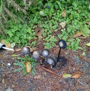 Mushrooms black inks cropped