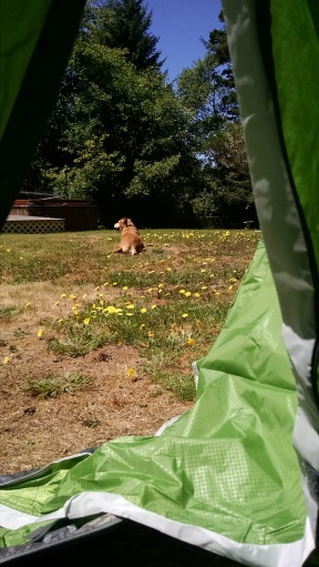 Tent_7216I[1]