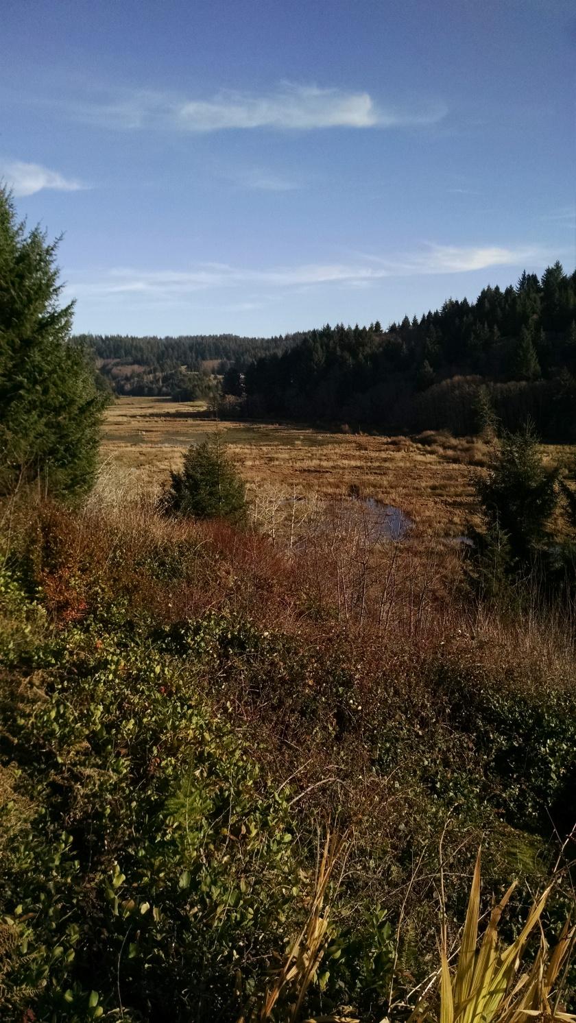 beaver-creek-122116f