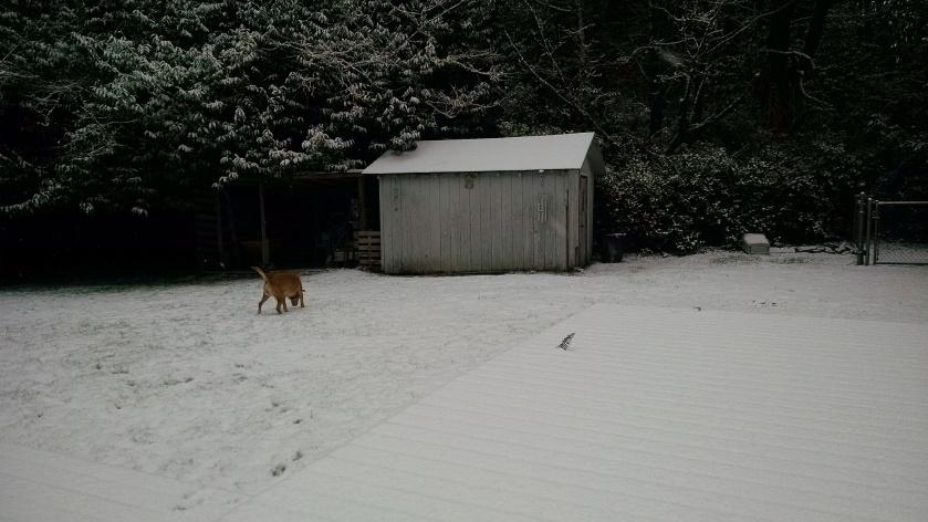 snow-1417c