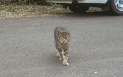 cat-seaside-9-93