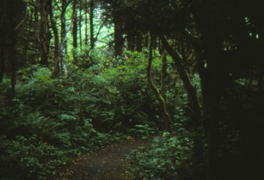 forest-oregon-1991